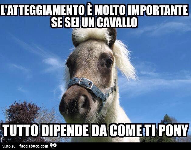 L'atteggiamento è molto importante se sei un cavallo. Tutto dipende da come  ti pony - Facciabuco.com