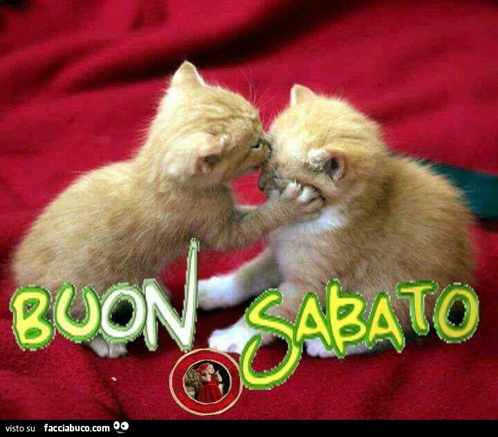 Popolare Gattini si baciano. Buon Sabato - Facciabuco.com GR92
