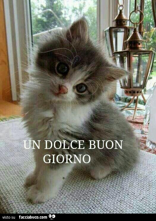 Gattino curioso un dolce buon giorno for Biglietti di buongiorno