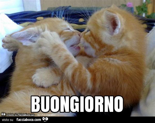 Bacio Tra Gattini Buongiorno Facciabuco Com